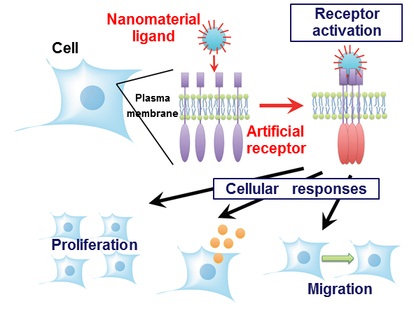 細胞治療への展開
